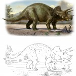 Triceratops prorsus